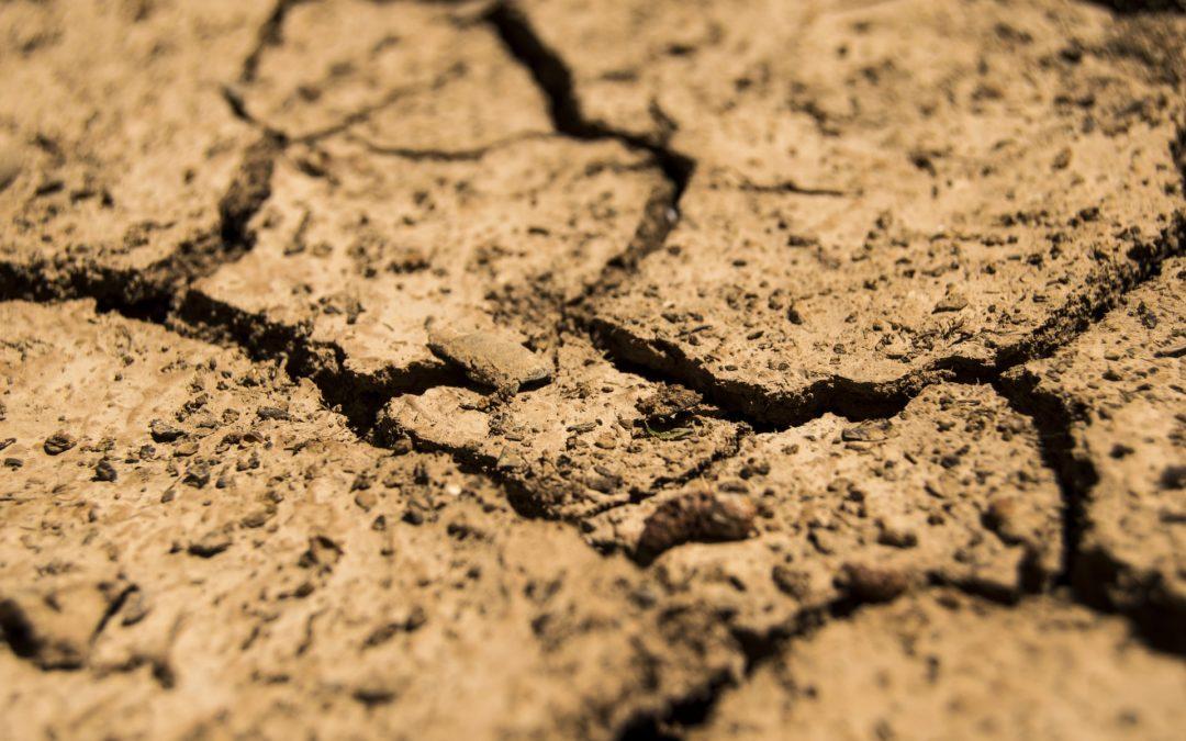 Po co robić analizę chemiczną gleby?