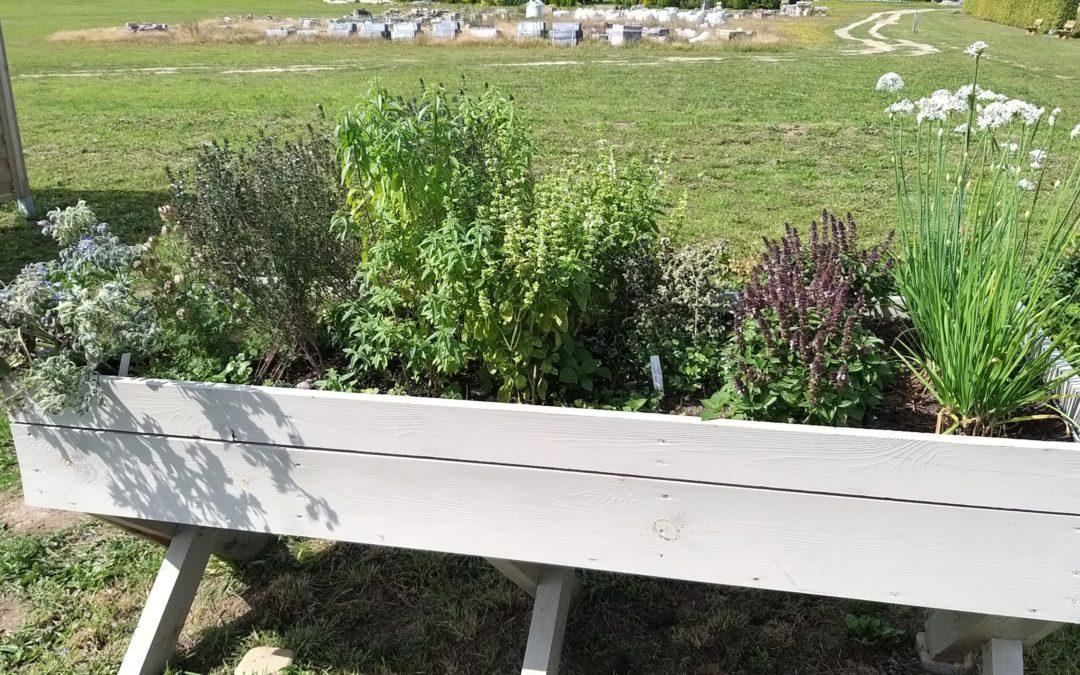 Zioła – rośliny proste w uprawie