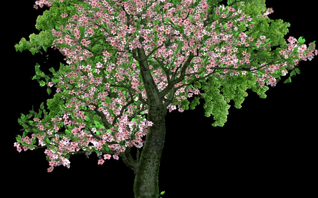 Przycinanie wysokich drzew w ogrodach