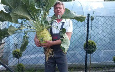 Działkowcy z pasją Piotr Holewa i jego gigantyczne warzywa